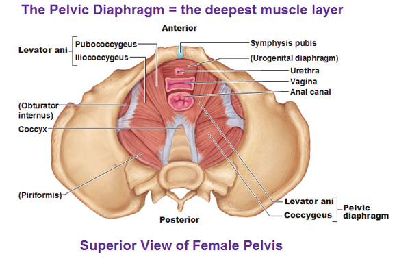 How To Look After Your Pelvic Floor